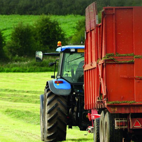 Silage additives